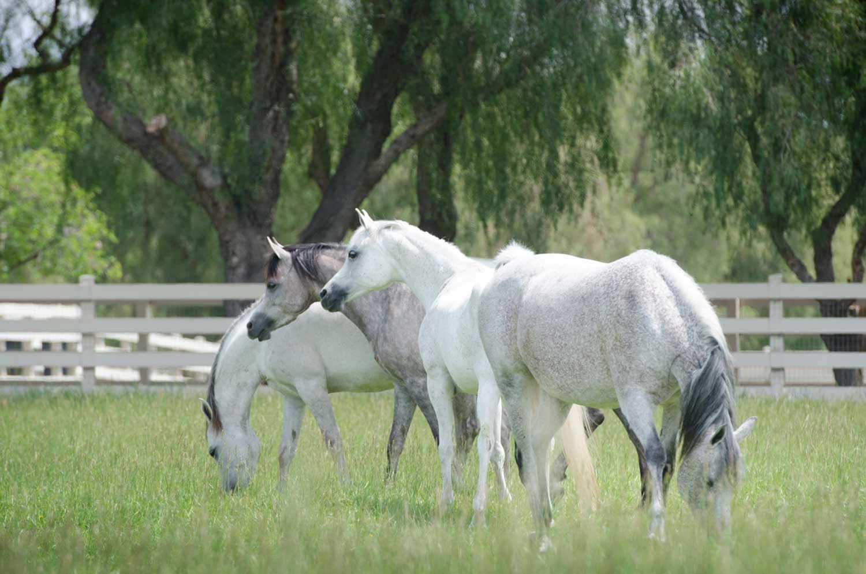 pasture-1751