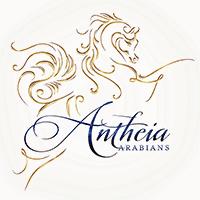 Antheia Arabians Logo